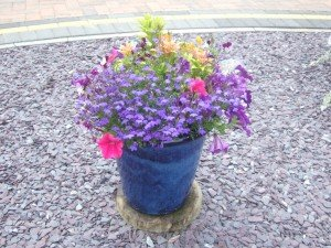 Planted blue pot surrounded by decorative gravel