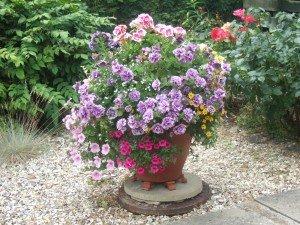 Planted pot standing on decorative gravel