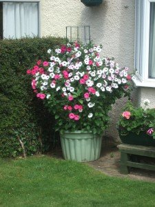 Pot planted with vibrant and strongly growing plant