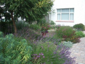 Front garden with lavender beds