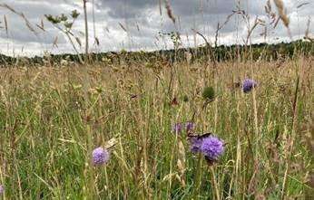 Oxford Meadow